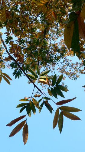 赤い葉黄色い葉