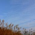 鳥の棲む葦原