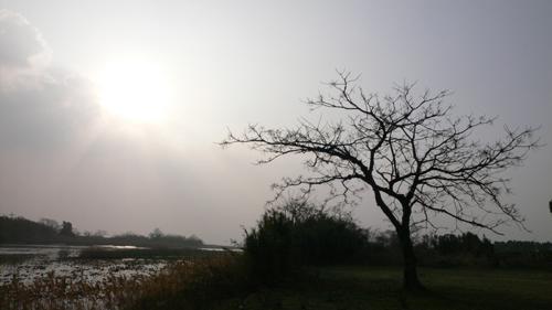 ムクロジ裸木