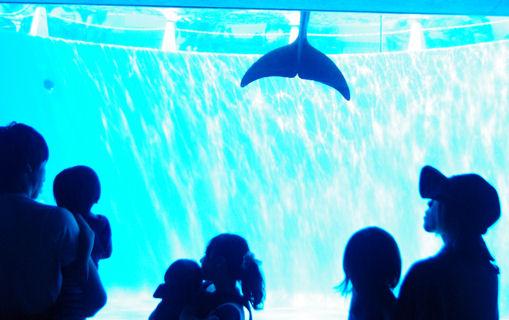 海きららイルカのプール