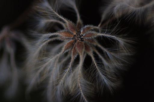 種子の羽根