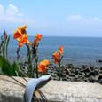 海とカンナ