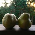 熟れた果実