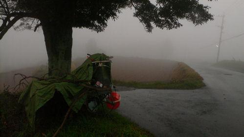 霧とタブノキ